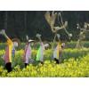 喜洋洋稻草人工艺品|专业的稻草人工艺制作