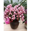 室内外观叶植物出租-绿植租赁认准锦色园艺