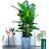 办公室绿植租赁预订|专业的绿植租赁就在浙江