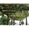 河北防腐木葡萄架-山东价格划算的铝合金葡萄架供应