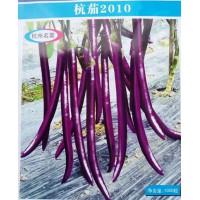 衢州线茄种苗厂 杭茄2010育苗基地